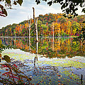 Autumn Colors Through The Trees On Monksville Reservoir - Long Pond Ironworks State Park by Gary Heller