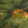Autumn Colors by Viola Jasko