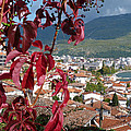 Autumn Colour - Ohrid - Macedonia by Phil Banks