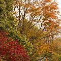 Autumn Comes To The Burbs by Phil Welsher