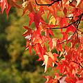 Autumn Cornered by Rachel Cohen