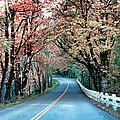 Autumn Country Road by Athena Mckinzie