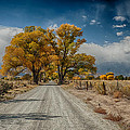 Autumn Country Road by Cat Connor