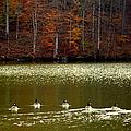 Autumn Cove by Karen Wiles