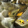 Autumn Creek by Christina Rollo