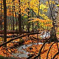 Autumn Creek In The Rain by Rodney Lee Williams