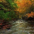 Autumn Creek by Melissa Petrey