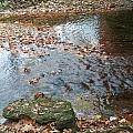 Autumn Creek by The Little Owl Gallery