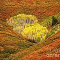 Autumn Crest by Jewell McChesney