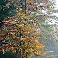 Autumn Cypress by Gary Richards