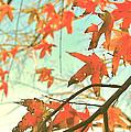 Autumn Dance by HweeYen Ong