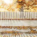 Autumn Day by Veronica Minozzi