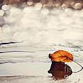 Autumn by Diana Kraleva