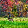Autumn Doe - Paint by Steve Harrington