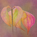 Autumn Dogwood 2 by Angie Vogel