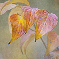 Autumn Dogwood by Angie Vogel