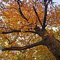 Autumn Dreams by Guido Montanes Castillo