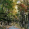 Autumn Drive by Barbara Bardzik