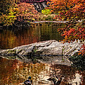 Autumn Duck Couple by Chris Lord