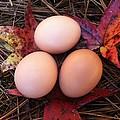 Autumn Eggs by Marcia B