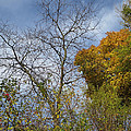 Autumn Ending by Ann Horn