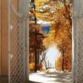 Autumn Entrance by Jessica Jenney