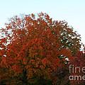 Autumn Eve by Susan Herber