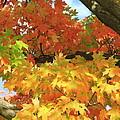 Autumn Extravaganza by Carol Komassa