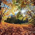 Autumn Fall Landscape In Forest by Michal Bednarek