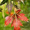 Autumn Falls by Darlene DeBoer
