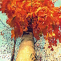 Autumn Fantasy 1 by France Laliberte