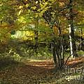 Autumn Feeling by Lutz Baar