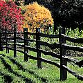 Autumn Fence And Shadows by Mike Nellums