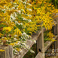 Autumn Fence by Brian Mollenkopf