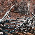 Autumn Fence by Douglas Barnard