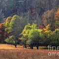 Autumn Field by Jill Lang