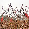 Autumn Fields by James Potts