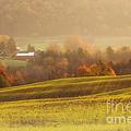 Autumn Fields by Michele Steffey