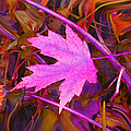 Autumn Fire by Ian  MacDonald