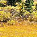 Autumn Fire In The Grass by Amy McDaniel