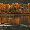 Autumn Fire by Sandy Sisti