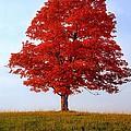 Autumn Flame by Steve Harrington