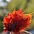 Autumn Flower by Sonali Gangane