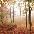 Autumn Fog by Marie Fortin