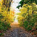 Autumn Forest by Alain De Maximy