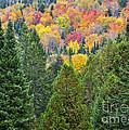 Autumn Forest by Alan L Graham
