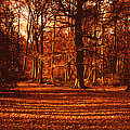 Autumn Forest by Anthony Dalton