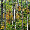 Autumn Forest Detail by Cascade Colors