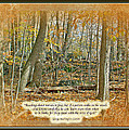 Autumn Forest - George Washington Carver Quote by Mother Nature
