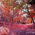 Autumn Forest by Lena Photo Art